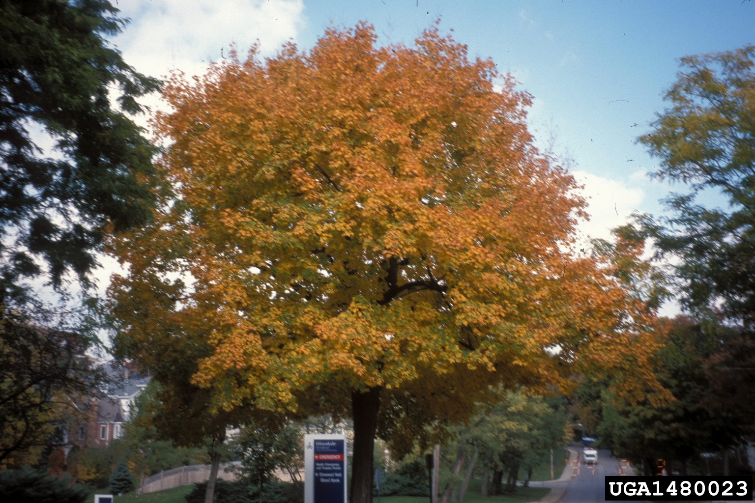 Replacements for the Ash Tree from Purdue