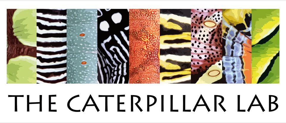 The caterpillar lab logo