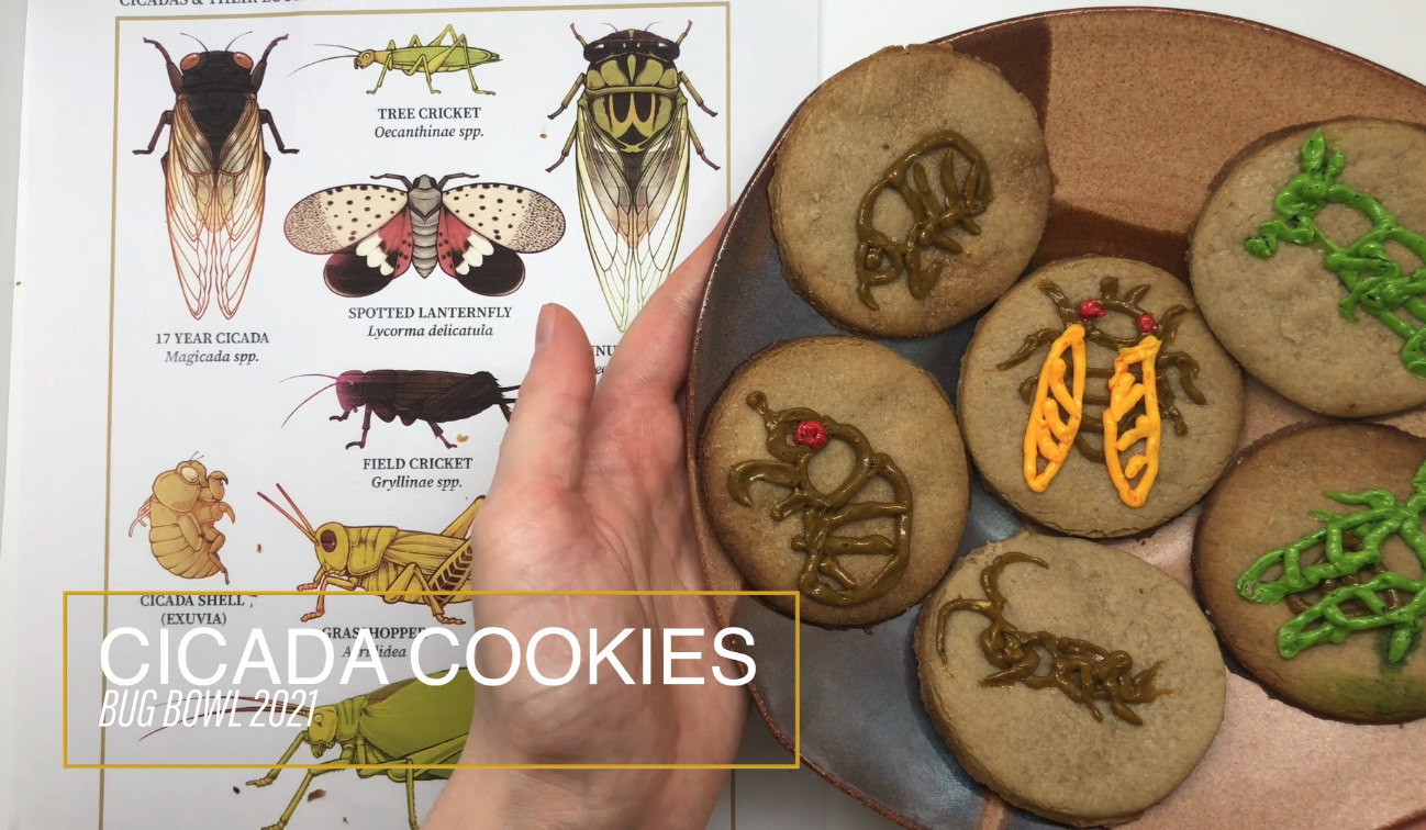 photo of a plate of cookies decorated as cicadas