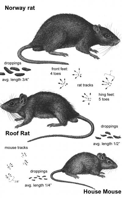 Purdue Pest Information Home