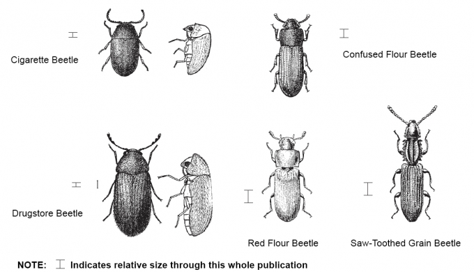 Common Kitchen Bugs http://psms29.com/cgi/common-kitchen-bugs