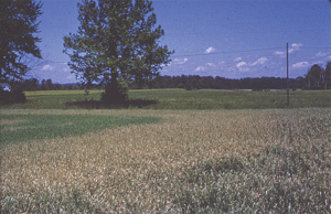 Damage to untreated area of field