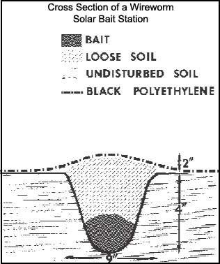 Cross section of a wireworm solar bait station