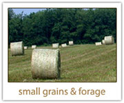 Small Grains and Forage