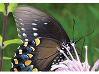 Butterfly encounter icon