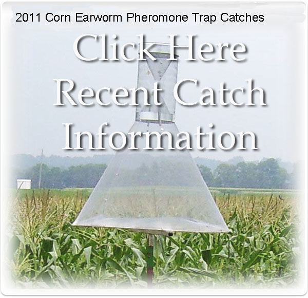 graphic corn earworm trap
