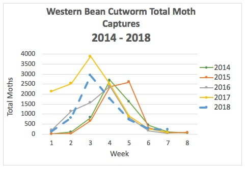 Western bean cutworm total moth captures.