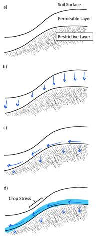 Figure 1. A cross section of a hillslope showing seep hydrology (Fig. 1a). During rainfall, water (blue arrows) moves vertically through the permeable layer (Fig. 1b). Only a small amount of water enters the restrictive layer and must flow laterally (Fig. 1c). With sufficient water movement, a saturated zone (blue shaded region) can form above the restrictive layer (Fig. 1d) and lead to crop stress.