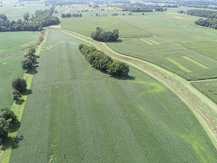 Figure 2. Soybean chlorosis and N deficiency pattern near Columbia City on Aug. 23, 2018.