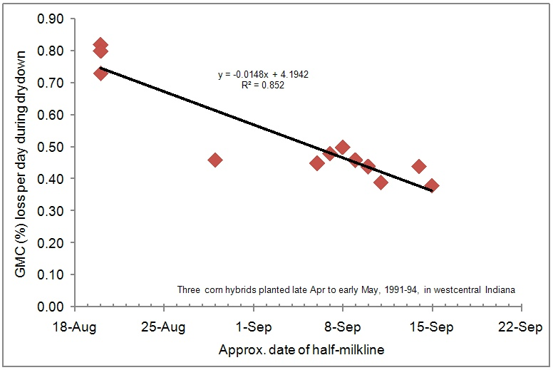 Fig. 3. Relationship between field drying rate and the date at which the grain nears maturity (half-milkline) for three corn hybrids planted late April to early May, 1991-1994, westcentral Indiana.