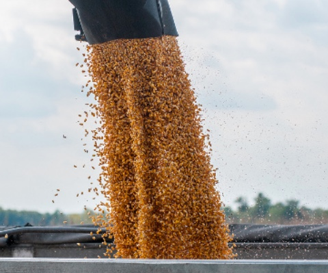The Purdue Crop Performance Program is designed to help farmers and other agriculturalist compare crop data across Indiana and the surrounding states. (USDA photo by Lance Cheung via Flickr)