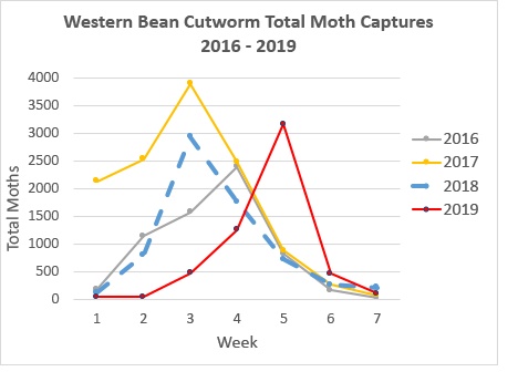 western bean cutworm total moth captures 2016-2019