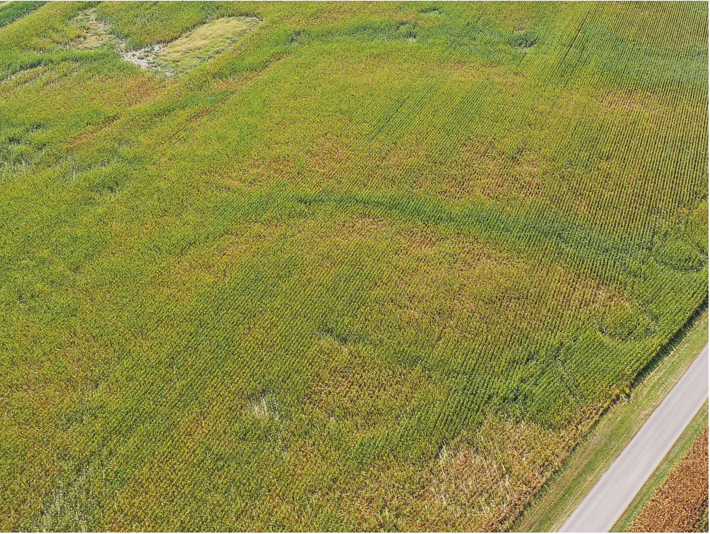 Aerial view of spatial variability for plant health, 24 Sep 2019.