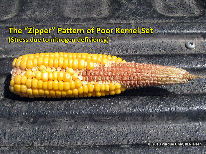 zipper pattern of poor kernel set