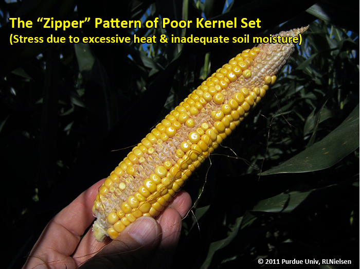 the zipper pattern of poor kernel set