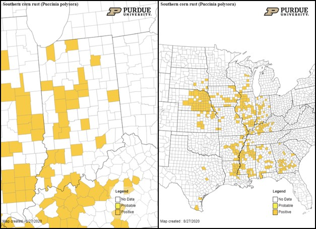 Figure 3. Map of counties confirmed for southern corn rust in Indiana and United States as of August 27, 2020.