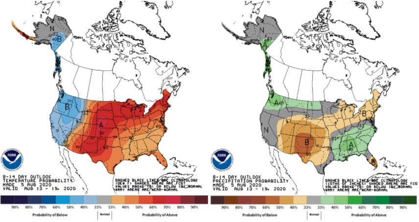 Figure 2. Probabilistic climate outlooks for temperature (left) and precipitation (right) for the period of August 13-19. Source: Climate Prediction Center.