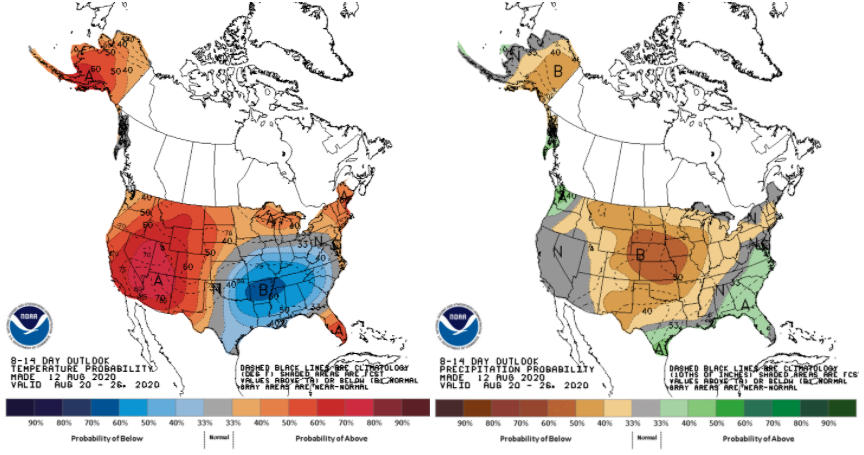 Figure 2. Probabilistic outlooks for above- or below-normal temperature (left) and precipitation (right) from the national Climate Prediction Center for August 20-26, 2020.