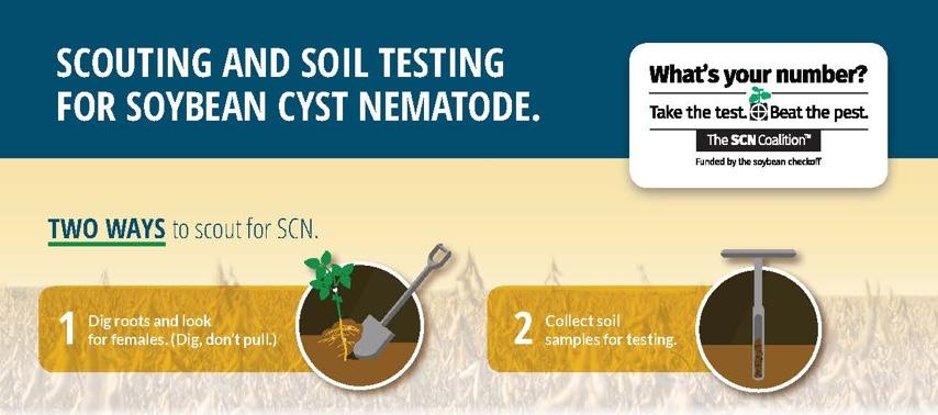 why scn soil test