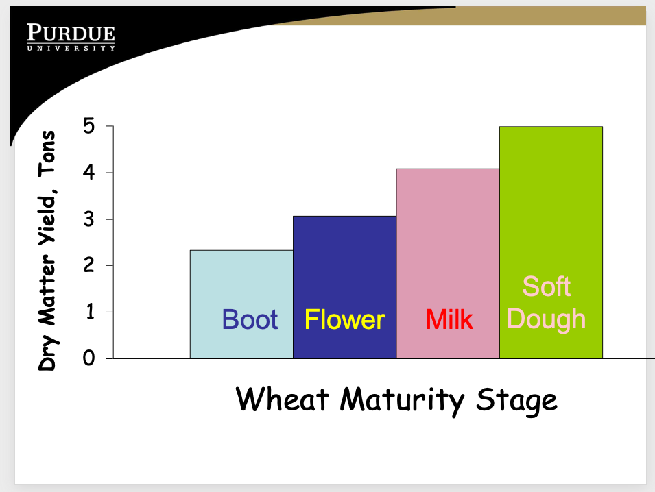 Wheat maturity stage - dry matter yield, tons.