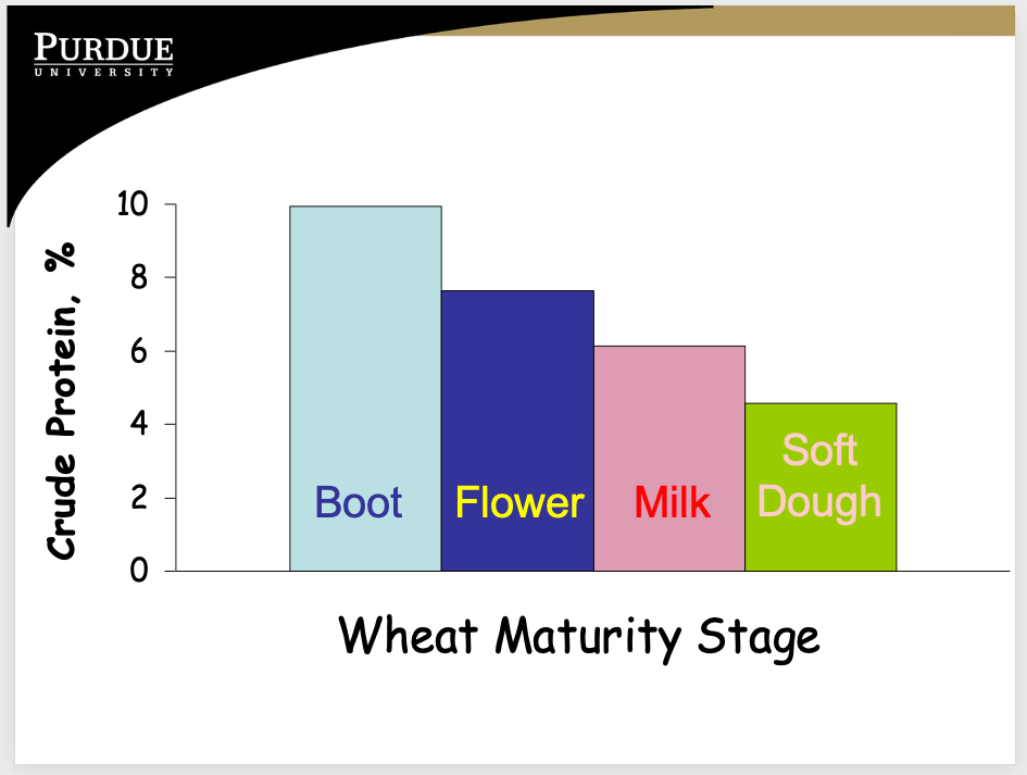Wheat maturity stage - crude protein, %.
