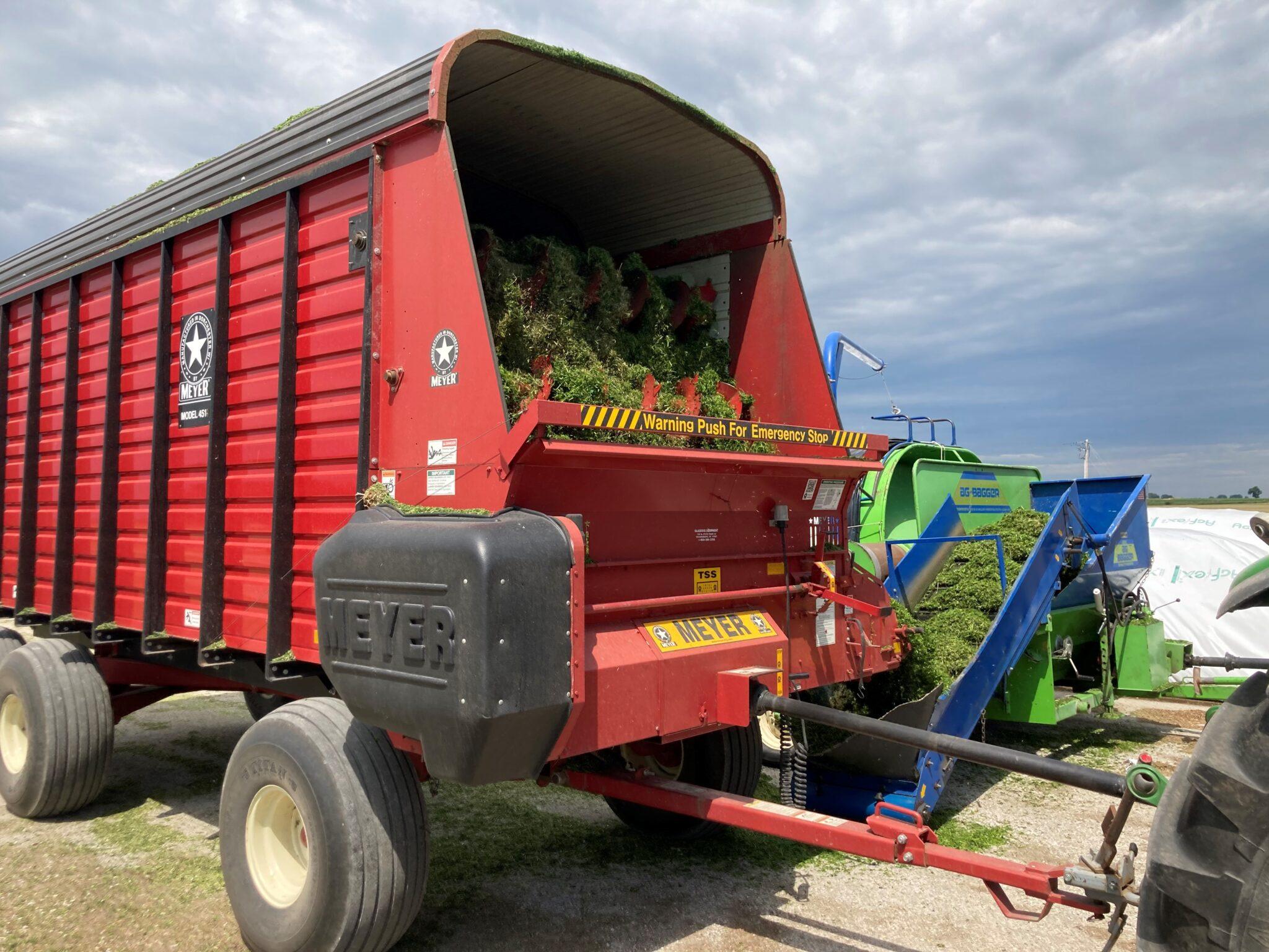 Alfalfa being unloaded.