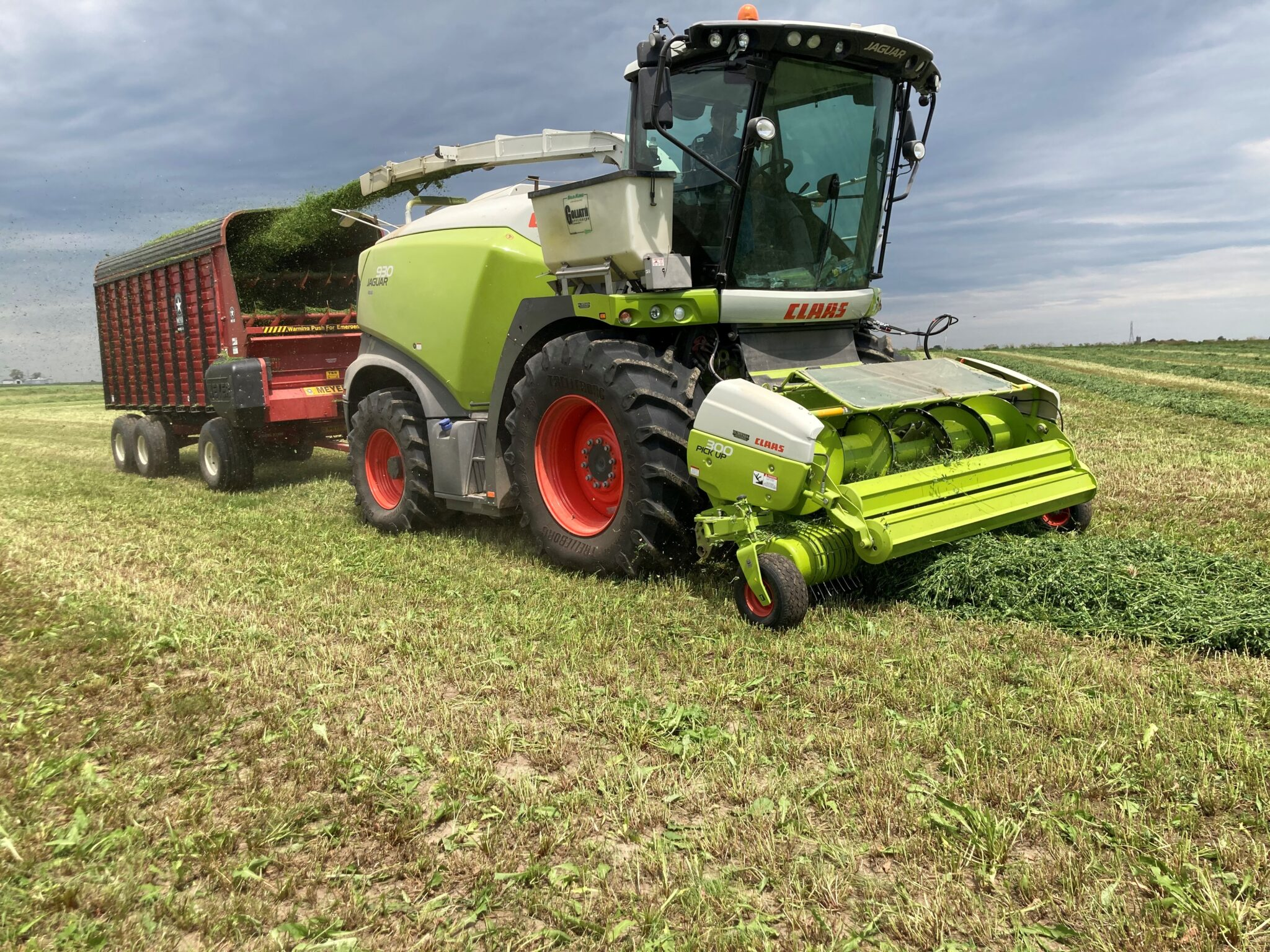 Alfalfa being chopped.