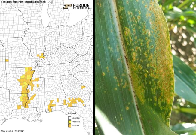 Figure 2. July 16, 2021 Southern corn rust map. Image of southern corn rust.