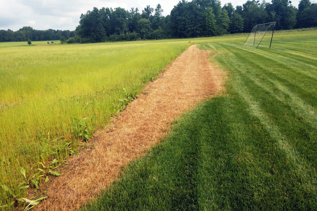 Marching worms finished with the hay, now the turf. (Photo Credit: John Obermeyer)
