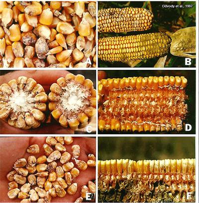 August 27, 2010 - Issue 22, Pest & Crop Newsletter ...