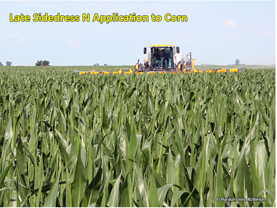 Late sideress N application to corn