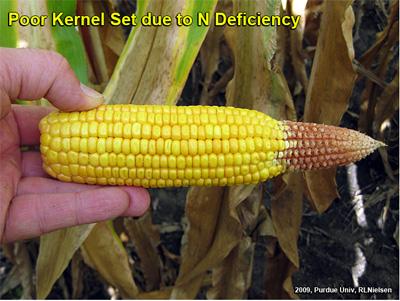 Poor kernel set due to N deficiency