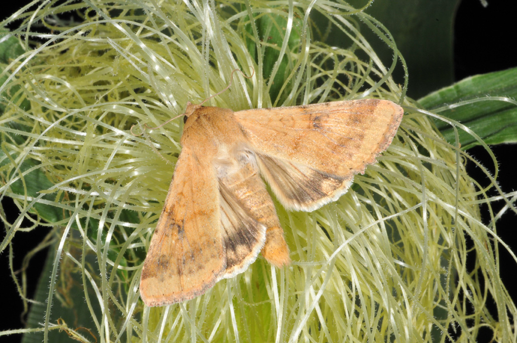 august 24 2012 issue 22 pest amp crop newsletter