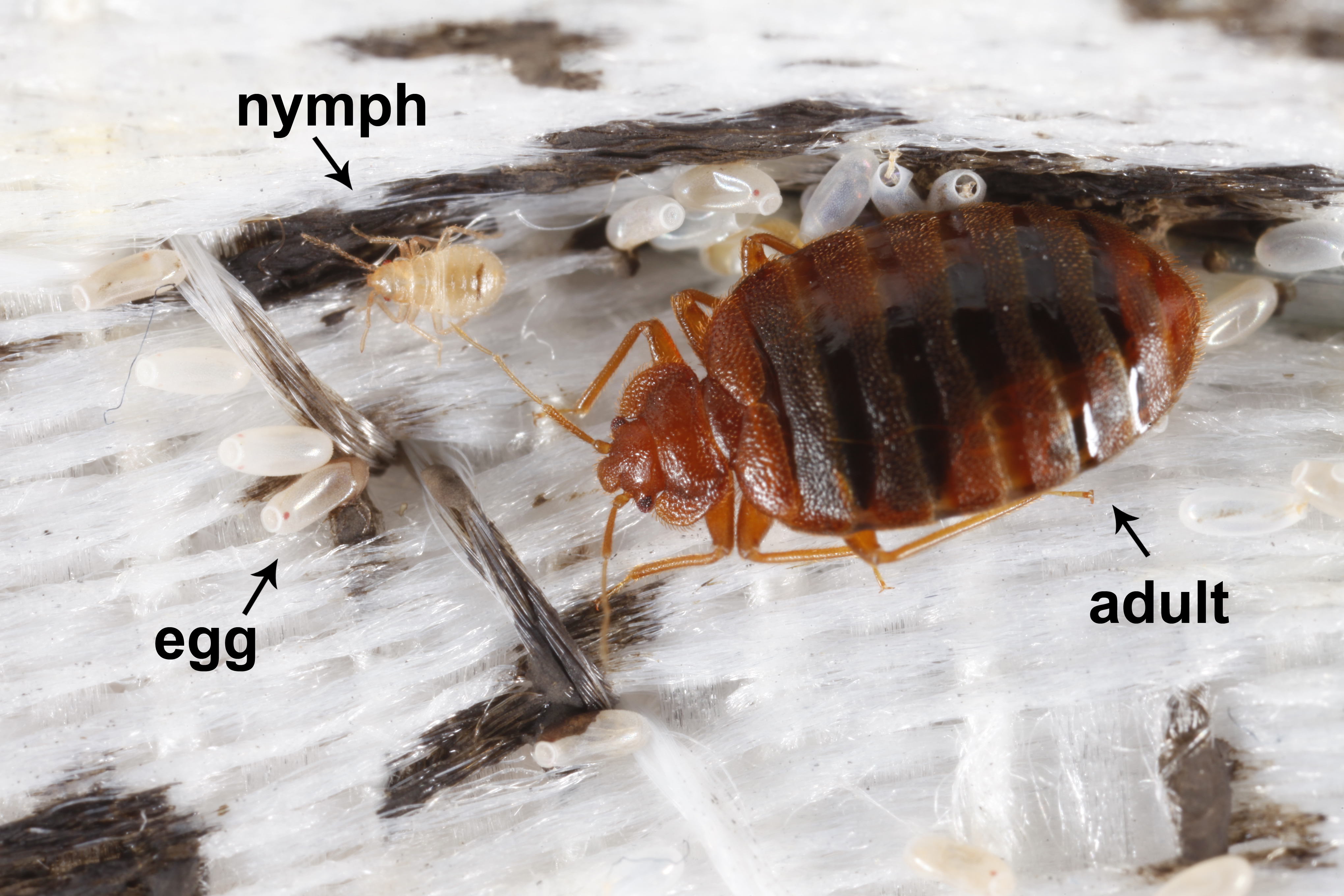 A Practical Guide To Bed Bug Prevention And Control For