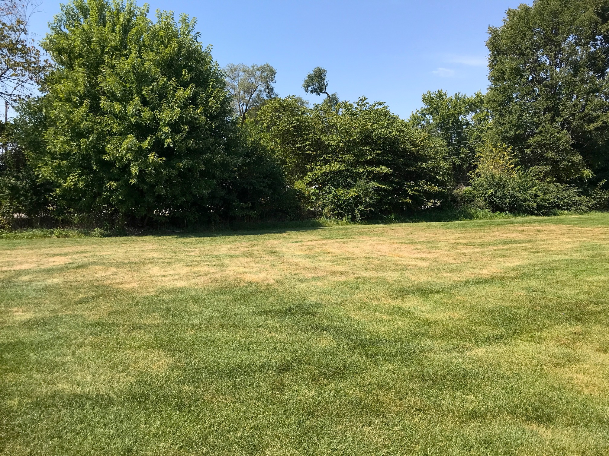 Managing White Grubs In Turfgrass