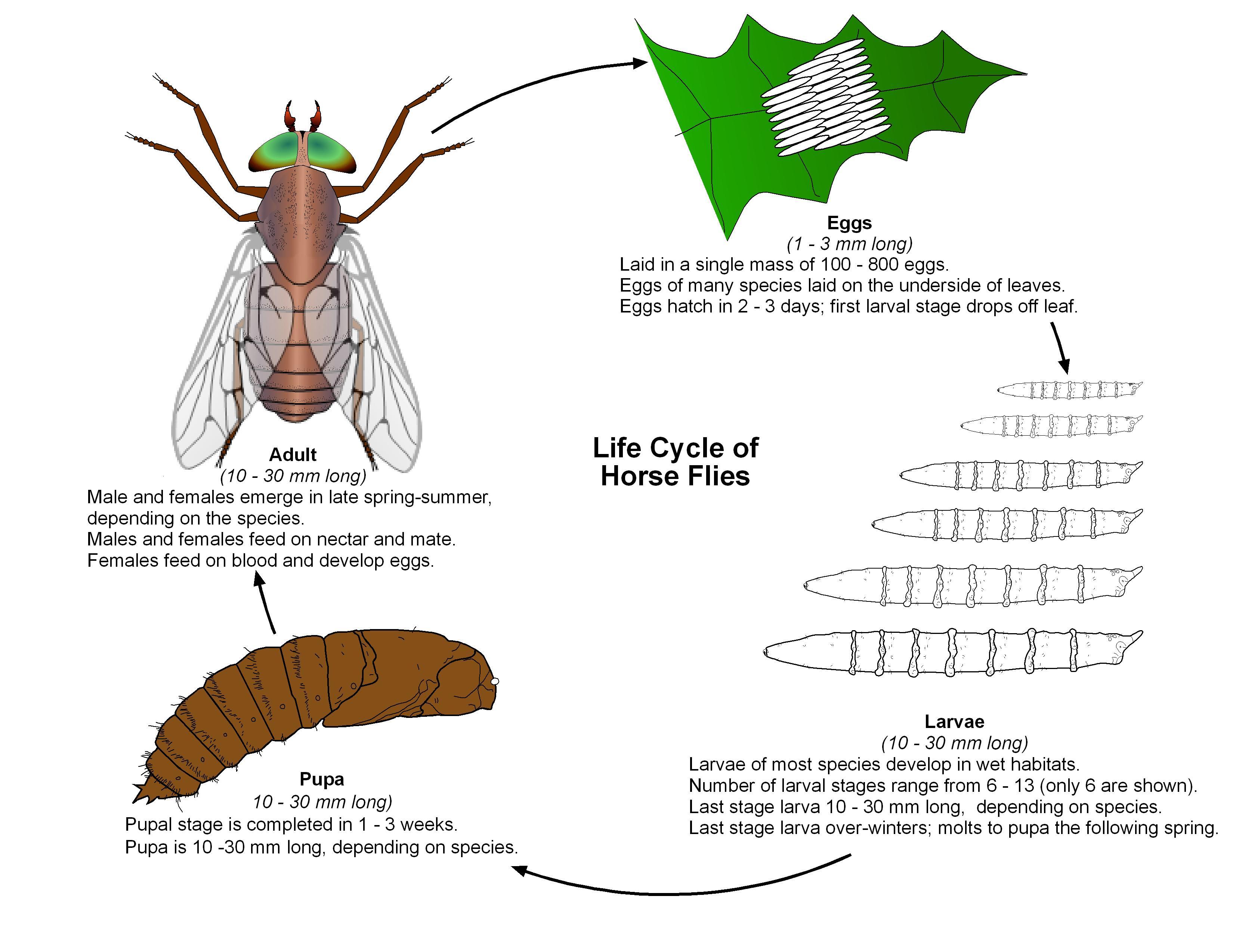 Resources | Public Health and Medical Entomology | Purdue ... - photo#10