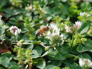Protecting Pollinators Thumbnail
