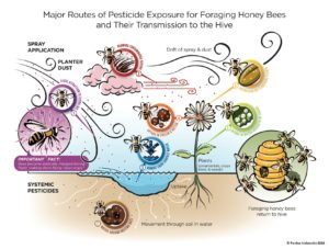 Protecting Pollinators at Home Thumbnail